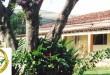 orquideas_foto2